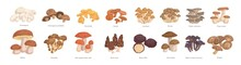 Set Of Realistic Colorful Edible Mushrooms Vector Graphic Illustration. Collection Of Various Type Of Fresh Autumn Forest Plants On Feet With Cap Isolated On White. Seasonal Natural Organic Food