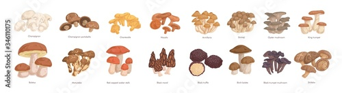 Fotografie, Obraz Set of realistic colorful edible mushrooms vector graphic illustration
