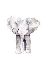 Cute Baby Elephant Calf Standing