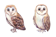 Watercolor Hand Painted Owls W...
