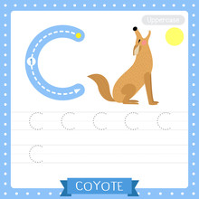 Letter C Uppercase Tracing Practice Worksheet. Howling Coyote