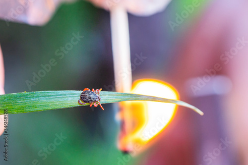 Photo Collect and search for ticks