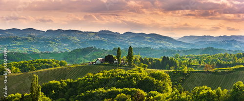 Fotomural Panoramic view at famous wine street in south styria, Austrian destination, tuscany like vineyard hills