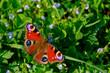 kolorowy motyl na wiosennej łące