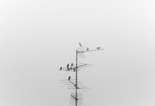 Some Birds Sitting On Television Antenna Silhouette In A Foggy Day In Black And White