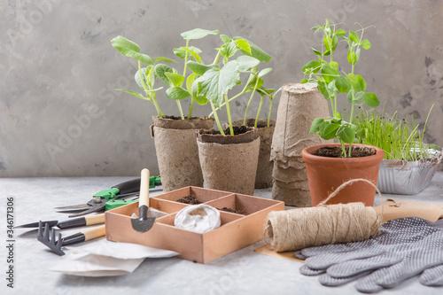Gardening farming Fototapeta