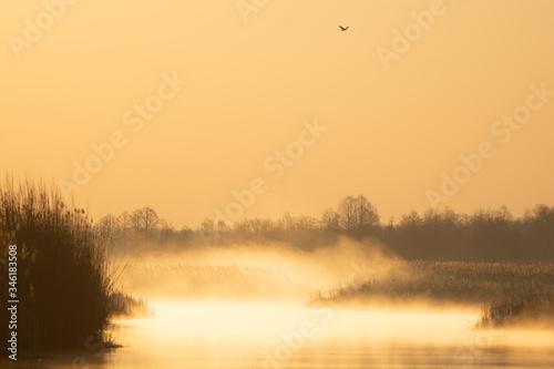 Fototapeta Wschód słońca nad rzeką Narew obraz