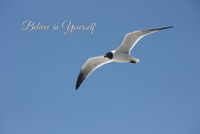 Seagull Flying In The Sky With...