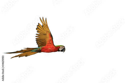 Foto One macaw parrot isolated on a white background