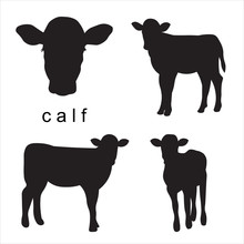 Vector Black Calf Illustration Of Farm Animals. Set Isolated On White Background. Head Of A Calf In Full Face.