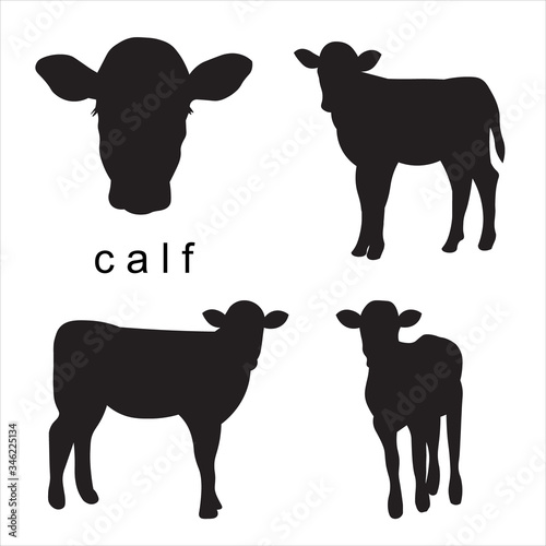 Vector black calf illustration of farm animals Fotobehang