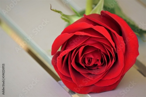 A single red rose laying on the metal table, Spring in GA USA.