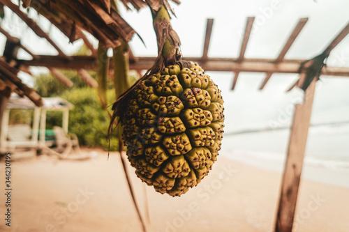 Tropikalny dziki owoc, ananas. - fototapety na wymiar