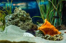 A Sea Urchin And A Starfish Co...