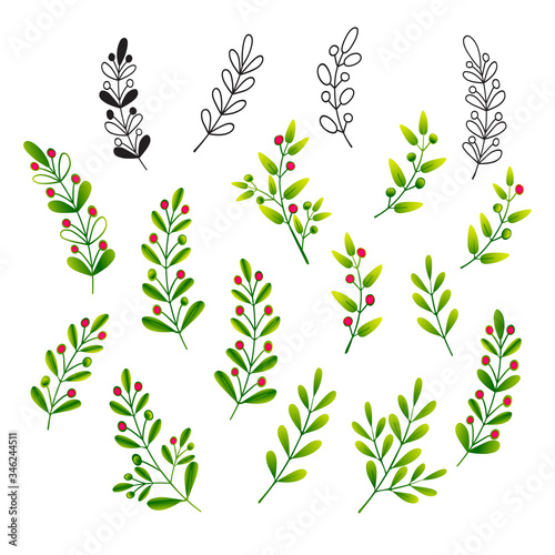 Fototapeta Sprigs with leaves and berries. Set of isolated color vector illustrations for design of invitations, greetings, floral patterns and ornaments. obraz na płótnie
