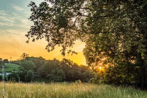 Fototapeta Atardecer en el monte entre arboles y arbustos obraz na płótnie