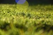 canvas print picture - Surface Level Of Grass