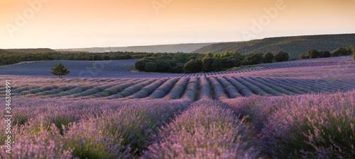 Fototapeta Scenic View Of Lavender Field Against Sky During Sunset obraz na płótnie