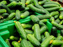 Cucumbers In Plastic Boxes On ...