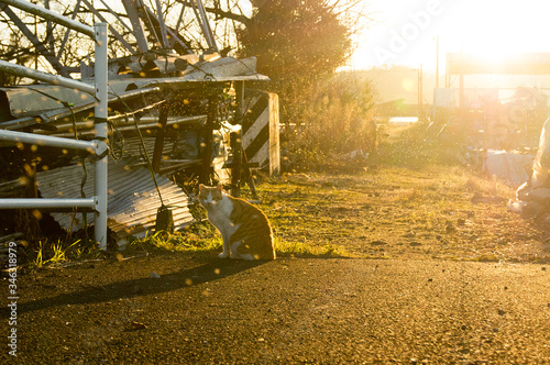 Cat Sitting On Street During Sunset Canvas Print