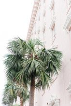 Palm Tree Against Pink Building