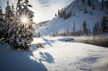 Bright Sunshine Peaks Through The Snowy Pine Trees In Yellowstone National Park In Winter