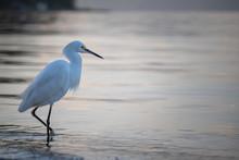 Heron, Water Bird Walking Near...