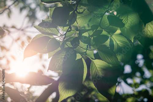 a scene of light shining through the green leaf of a forest.