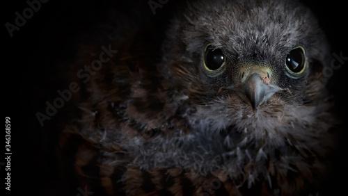 Foto Close-up Portrait Of Owl Against Black Background
