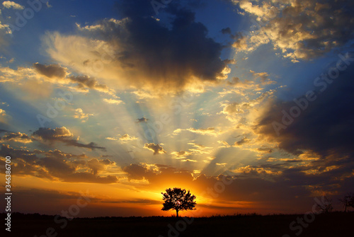 lonely tree at sunset on a hot day