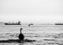 Canada Goose On Sea Against Sky