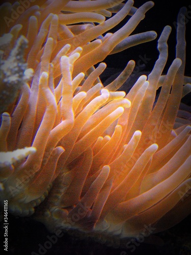 Photo Close-up Of Coral Sea Anemone