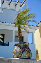 Palma W Kolorowej Donicy