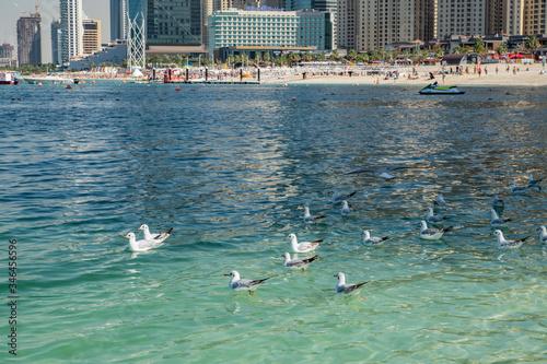 Photo travel, walk, rest, city, coast, Persian, Gulf, water, glare, reflection, day, l