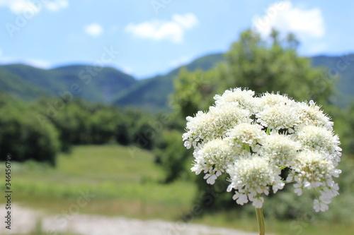 Fotografia Fiore bianco in primo piano, natura sullo sfondo con colline, cielo blu con nuvole