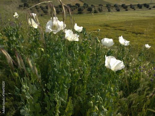 Fototapeta wiosna pejzaż widok łąka wiosna słonecznie obraz