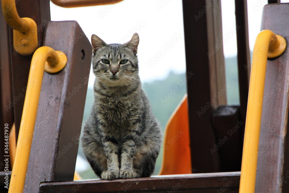 Fototapeta felino en el monte