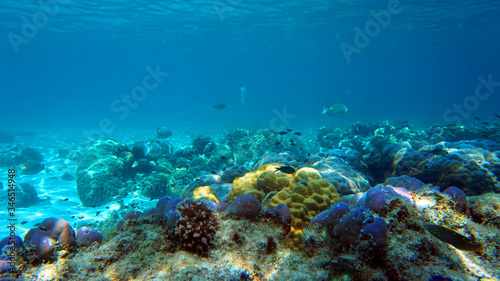 Fototapety, obrazy: coral reef and fish underwater, scuba diving