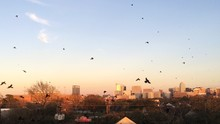 Flock Of Birds Flying Over Bui...