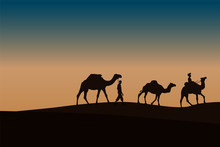 Two Caravan With Camels In The...