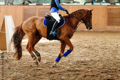 Fotografie, Obraz horsewoman on horse bay color riding indoors arena