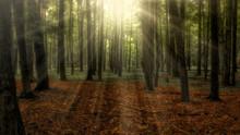 Sun Shining Through Trees In F...