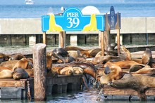 Seals Resting On Crate In Harbor