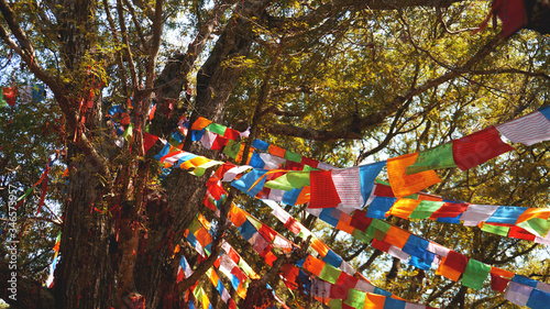 Multi-colored festive flags hang on the background of trees, large pine and blue sky Slika na platnu