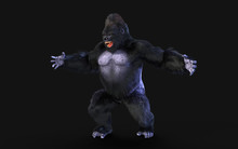 3d Illustration Of A Silverback Gorilla On Dark Background With Clipping Path.