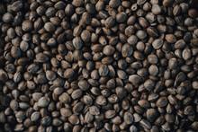 Marijuana Seeds In The Foregro...