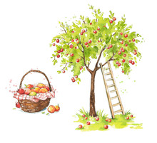 Apple Tree With A Ladder And A...