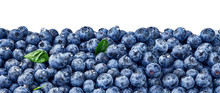 Fresh Blueberry Background. Bl...