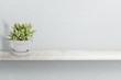 Suculent plant on vase isolated on white background vase ornament