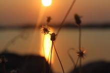 Close-up Of Orange Flowering P...